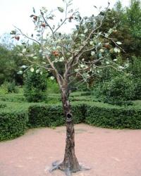 Райская яблоня в Салгирке, г. Симферополь