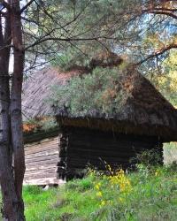 Музей в Пирогові. Старовинна клуня, Буковина.