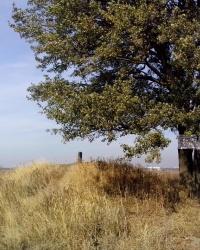 Геодезичний знак ГУГК 6025 поблизу с. Софіївська Борщагівка