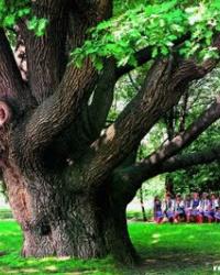Историко-культурный комплекс «700-летний Запорожский дуб»