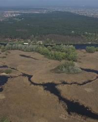 Обуховские плавни (Протовчанские плавни) на реке Днепр. Днепровско-Орельский природный заповедник