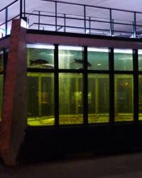 Аквариум на Монастырском острове