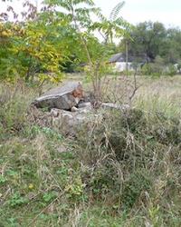 Лагерь для военнопленных Шталаг 338 (Stalag 338)