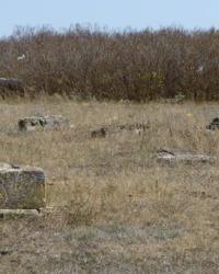 Кладбище немецкой колониии Карлсруэ в с.Степовое