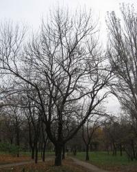 Улетели листья