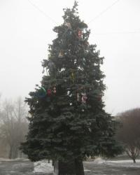 Здравствуй, елка, Новый Год