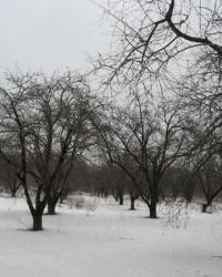 Ленинский сад на территории больницы профзаболеваний в Донецке