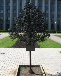 Цветы и ... дерево в подарок