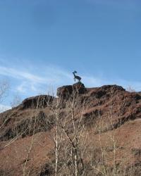 Олень на терриконе шахты 17 в Донецке