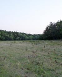 Вековые дубы у Кочережек. Тайник