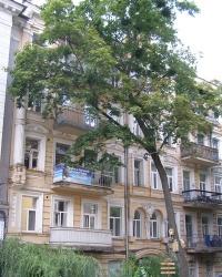 м. Київ. Будинок № 20 по вул. Франка.