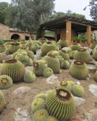 Сад кактусов «Пинья де Роса» (Jardi Botanic Tropical Pinya de Rosa)