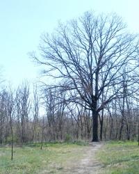Мемориальный комплекс «Священный Хортицкий дуб»