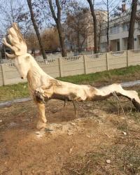 Резные фигуры из старых деревьев в Павлограде