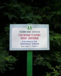 Генетическая резервация ели обыкновенной возле с. Пилиповичи