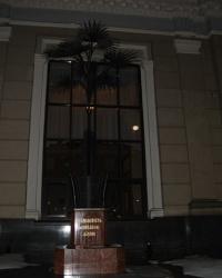 Львовская пальма Мерцалова