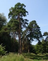 Ташанский парк